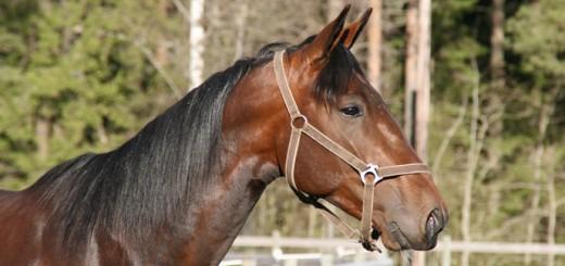 Lill Axel - stor